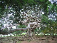 この木なんの木の幹元