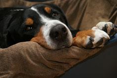 Innerwise® im Saarland für die Gesundheit Ihres Tieres