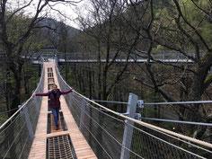 Hängebrücke für Einsteiger im Baumwipfelpfad