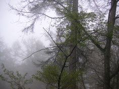 雨上がりの森の中