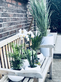 Urban Jungle Pflanzen Interiordesign