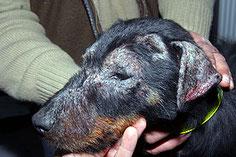 Consultation de Dermatologie Vétérinaire