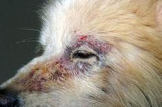 Cabinet vétérinaire dédié à la dermatologie à Maisons Alfort