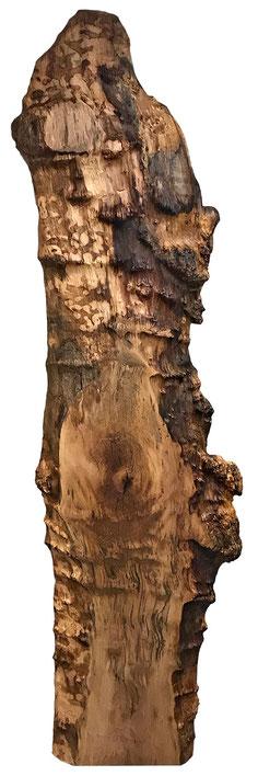 Stammbohle mit teilweise naturbelassener, unregelmäßiger Oberfläche und gesägten Bereichen