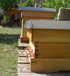 Am Flugloch herrscht reger Flugverkehr. Die Bienen tragen fleißig Pollen und Nektar ein und