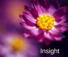 Flores que te llevan a la claridad de un insight