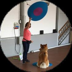Crossdogging Posten Training Hund