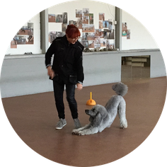 Dancing Circle Dogs