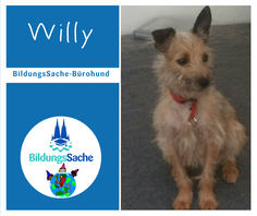 Willy, BildungsSache-Bürohund