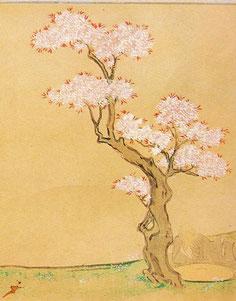 鎌倉時代の桜。『西行物語絵巻』いわゆる山桜です。まだソメイ ヨシノはありません。