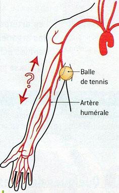 Les principales artères du bras? Source: Nathan SVT 2006.