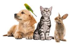 Pflegeprodukte für Tiere