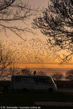 Wohnmobil Hafen Mortagne-sur-Gironde Stare Vogelschwarm Abendstimmung Abendrot