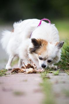 Hund findet Essensreste beim Spaziergang