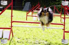 ec chiens fait la liste des sports canins avec agility mondioring obé-rythmée obéissance et ring. La pratique de ces activité se fait avec un educateur canin ou en club canin et le chien doit avoir suivi des cours d'education canine