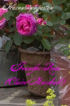 Rosen Hexenrosengarten Jennifer Rose Claire Marshall