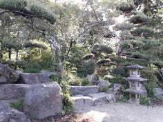 pins et pierres dans un jardin