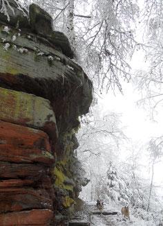 Wintertraum im Pfälzer Wald