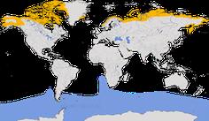 Karte zur Verbreitung der Falkenraubmöwe (Stercorarius longicaudus)