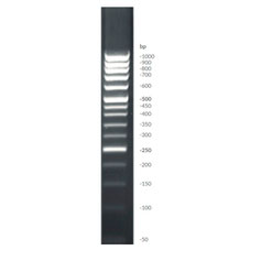 DNA Ladder (50-1000 bp)