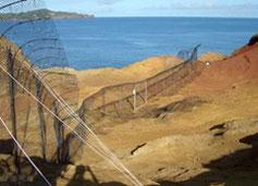 環境省によってつくられた海鳥保護フェンス