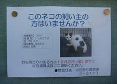 島内の掲示板に張り出される飼い主照会