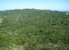 父島の乾性低木林