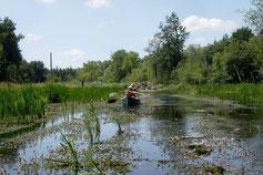 Die von Bibern mitgestaltete freie Fläche unterscheidet sich von den engen, baumbestandenen Windungen des kleinen Flusses Dorfen.