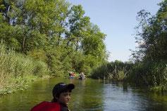 Eine urwüchsige und beschauliche Naturlandschaft konnten die Teilnehmer der Kanufahrten bei der Fahrt erleben.