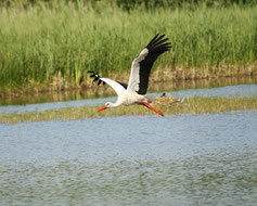 Visite de la zone de nidification des cigogne