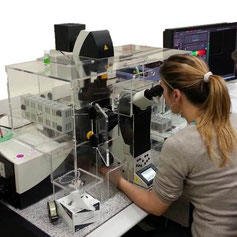 The confocal microscope equipped with the environmental chamber