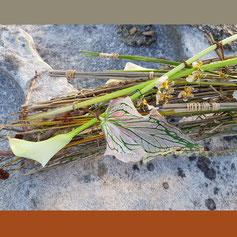 Lawrence Kwong KEITA stickrope Greengabes