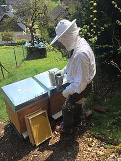 Imker Overath Honig Bienen