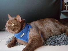 Geschirr Katze