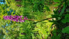 Orchideenwiese Berneck