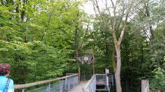 Noch sind wir nicht ganz oben auf dem Baumkronenpfad...