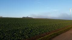 Nebel zieht langsam auf - Klick auf's Bild - dann erkennst du 3 Windräder und ein Sendeturm...