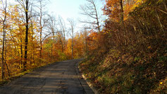 Herbstlaub hält sich standhaft an den Ästen...