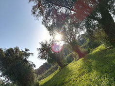 Olive olio extravergine di oliva IGP il Secolare