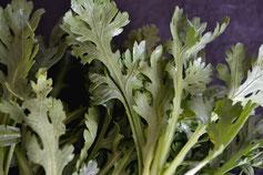無農薬野菜 夏野菜 スリーエフ農法