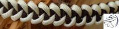 Shark Jaw Bone, bis 2 Farben möglich