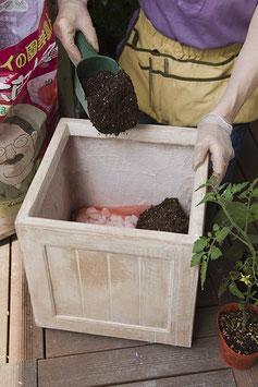 鉢に鉢底石と砂を入れる