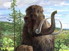 Bild: Mammutmuseum