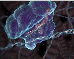 Streptococcus pyogenes Cas9 enzyme