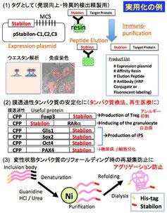 lipoxygenase阻害剤およびα-glucosidase阻害剤の分離・精製