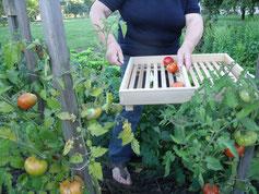 Panier clayette jardin