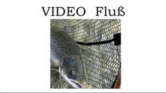 Lachse angeln in Norwegen, mittlerer Fluss, Lachs mit Blinker