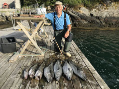Lachse angeln in Norwegen, angeln in Meer und Fjord auf Seelachse, Pollack, Dorsch,