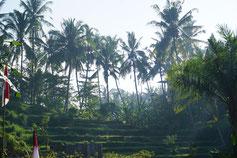 Reissterasse ind Balin Indonesien