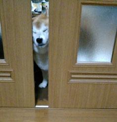 扉をグリグリ・・